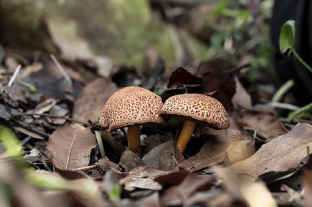 most expensive mushroom