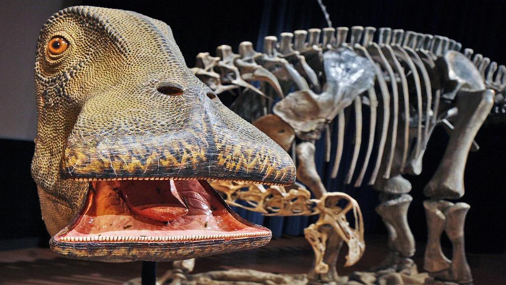 Dinosaur With 500 Teeth